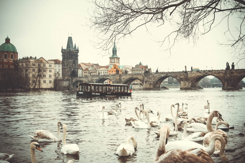 prague-charles-bridge-czech-republic-swans-water